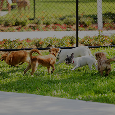 Large Dog Park at The New Broadmoor Apartments